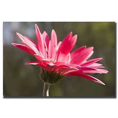 Trademark Fine Art Pink Flower by Cary Hahn-Canvas Art Ready to Hang 18x24 Inches