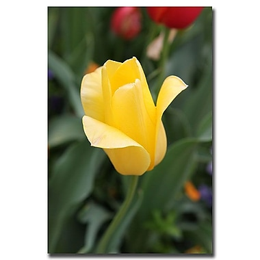 Trademark Fine Art Yellow Tulip by Cary Hahn-Canvas Art Ready to Hang