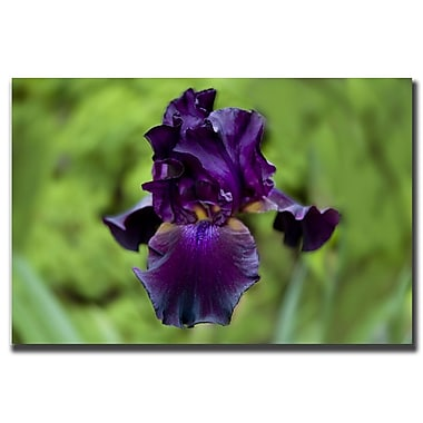 Trademark Fine Art Purple Flower by Cary Hahn-Canvas Art Ready to Hang