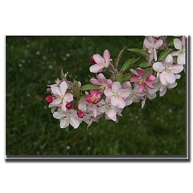 Trademark Fine Art Pink Flowers by Cary Hahn-Canvas Art Ready to Hang