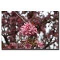 Trademark Fine Art Pink Bloom by Cary Hahn-Canvas Art Ready to Hang 35x47 Inches