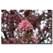 Trademark Fine Art Pink Bloom by Cary Hahn-Gallery Wrapped Canvas Art 24x32 Inches