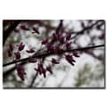 Trademark Fine Art Purple Bloom by Cary Hahn-Gallery Wrapped Canvas Art 18x24 Inches