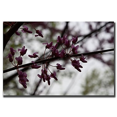 Trademark Fine Art Purple Bloom by Cary Hahn-Canvas Art Ready to Hang 35x47 Inches