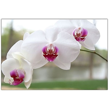 Trademark Fine Art Cary Hahn 'White Orchid' Canvas Art 14x19 Inches