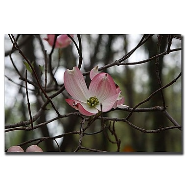 Trademark Fine Art Pink Dogwood by Cary Hahn-Canvas Art Ready to Hang 24x32 Inches