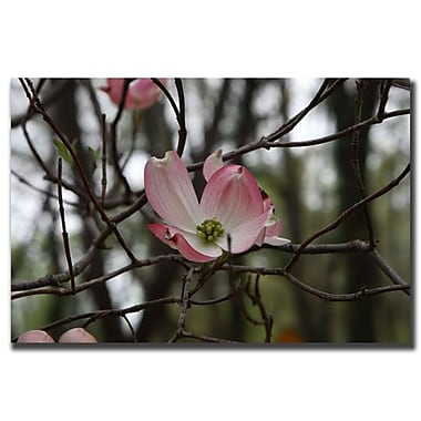 Trademark Fine Art Pink Dogwood by Cary Hahn-Canvas Art Ready to Hang 35x47 Inches