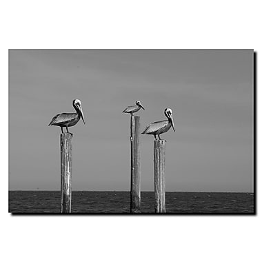 Trademark Fine Art Cary Hahn 'Pelicans at Bay' Canvas Art 14x19 Inches