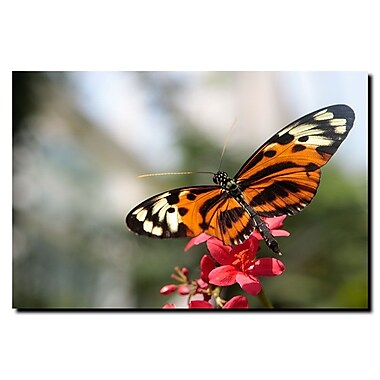Trademark Fine Art Tropical Butterfly by Hahn Ready to Hang Canvas Art
