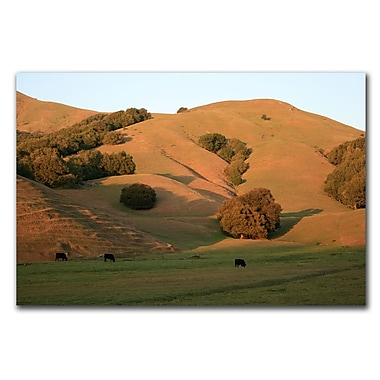 Trademark Fine Art Red Hills Flanders by Colleen Proppe Ready to Hang