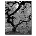 Trademark Fine Art David Farley 'Japanese Tree II' Canvas Art