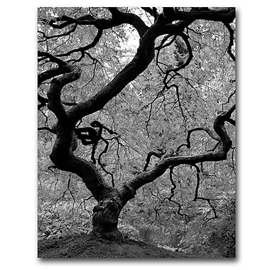 Trademark Fine Art David Farley 'Japanese Tree II' Canvas Art 18x24 Inches