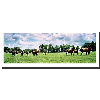 Trademark Fine Art Kentucky Horse Field by Preston-Ready to Hang Art 16x48 Inches