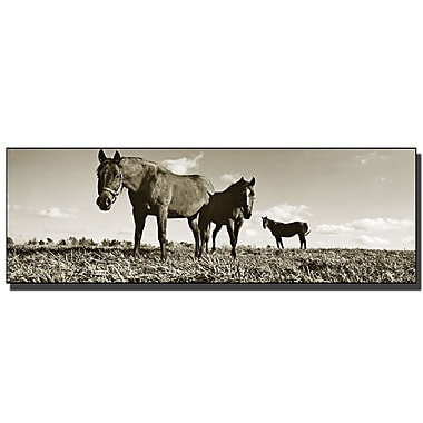 Trademark Fine Art The Horses by Preston-Ready to Hang Art 16x47 Inches