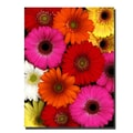 Trademark Fine Art Preston 'Flowers' Canvas Art Ready to Hang 24x32 Inches