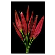 Trademark Fine Art Preston, 'Molly Lily' Canvas Art 18x24 Inches