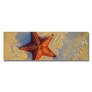 Trademark Fine Art Preston 'Starfish' Canvas Art 16x47 Inches