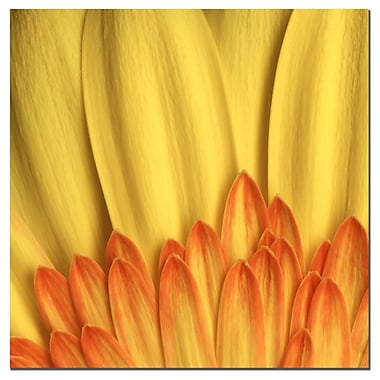 Trademark Fine Art AIANA, 'Flame' Canvas Art