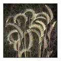 Trademark Fine Art AIANA 'Prairie Grass' Canvas Art 18x18 Inches