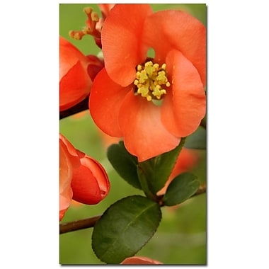 Trademark Fine Art Kathie McCurdy 'Quince' Canvas Art