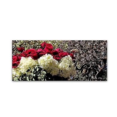 Trademark Fine Art Kathie McCurdy 'Roses' Canvas Art