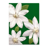 Trademark Fine Art Kathie McCurdy 'White Clemantis' Canvas Art