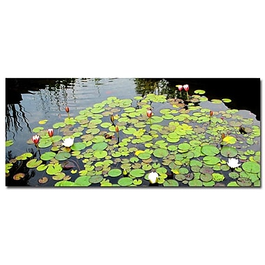 Trademark Fine Art Kathie McCurdy 'Summer Lily Pond' Canvas Art 14x32 Inches