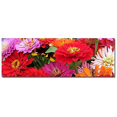 Trademark Fine Art Kathie McCurdy 'Zinnia Frieze' Canvas Art 16x47 Inches
