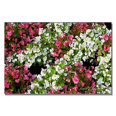 Trademark Fine Art Kathie McCurdy 'Big White Flower' Canvas Art