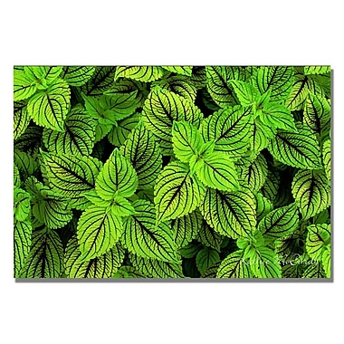 Trademark Fine Art Kathie McCurdy 'Coleus' Canvas Art 22x32 Inches
