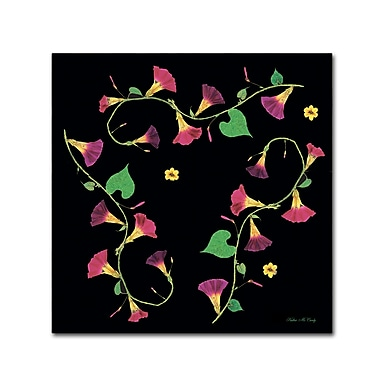 Trademark Fine Art Kathie McCurdy 'Pressed Flowers Morning Glories' Canvas Art