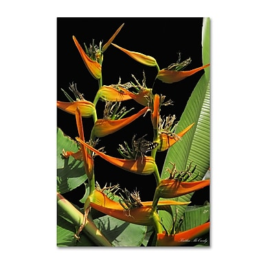Trademark Fine Art Kathie McCurdy 'Tropical Paradise' Canvas Art