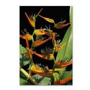 Trademark Fine Art Kathie McCurdy 'Tropical Paradise' Canvas Art