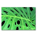 Trademark Fine Art Kathie McCurdy 'Tropical Leaf' Canvas Art 22x32 Inches
