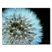 Trademark Fine Art Kathie McCurdy 'Flame Larger' Canvas Art