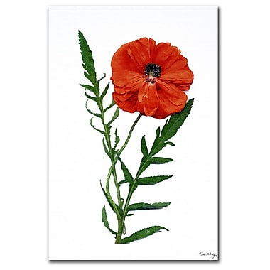 Trademark Fine Art Poppy by Kathie McCurdy-Canvas Art Ready to Hang