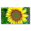 Trademark Fine Art Kathie McCurdy 'Sunflower' Canvas Art 18x32 Inches