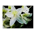 Trademark Fine Art Kathie McCurdy 'White Azalea' Canvas Art
