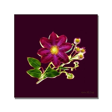 Trademark Fine Art Kathie McCurdy 'Fern Center' Canvas Art
