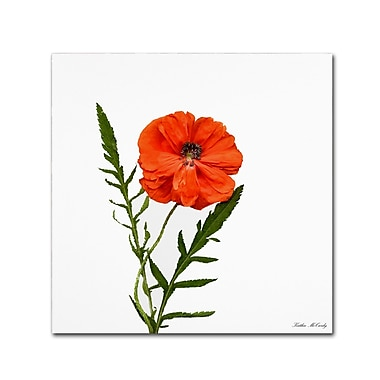 Trademark Fine Art Kathie McCurdy 'Poppy' Canvas Art