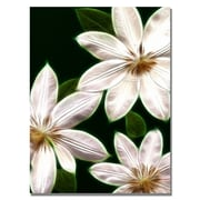 Trademark Fine Art Kathie McCurdy 'White Clematis' Canvas Art 18x24 Inches