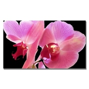 Trademark Fine Art Kathie McCurdy 'Orchid' Canvas Art 18x24 Inches