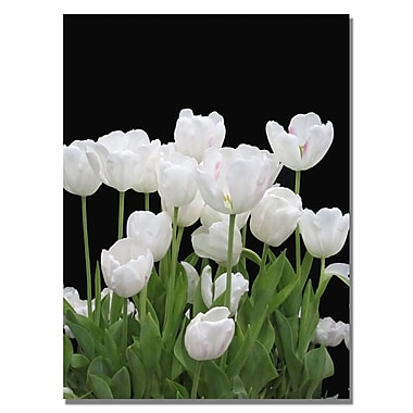 Trademark Fine Art Kathie McCurdy 'White Tulips' Canvas Art 18x24 Inches