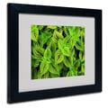 Trademark Fine Art Kathie McCurdy 'Coleus' Matted Art Black Frame 11x14 Inches