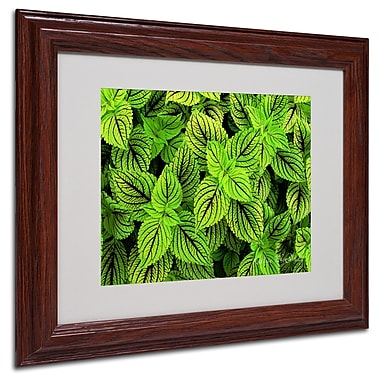 Kathie McCurdy 'Coleus' Matted Framed Art - 16x20 Inches - Wood Frame