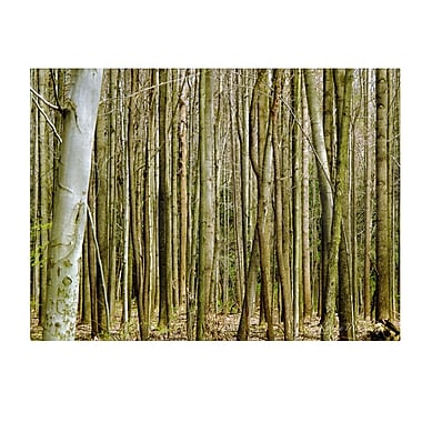 Trademark Fine Art Kathie McCurdy 'Forest Floor Spring' Canvas Art 16x24 Inches