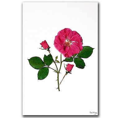 Trademark Fine Art Rosy the Rose by Kathie McCurdy Canvas Ready to Hang