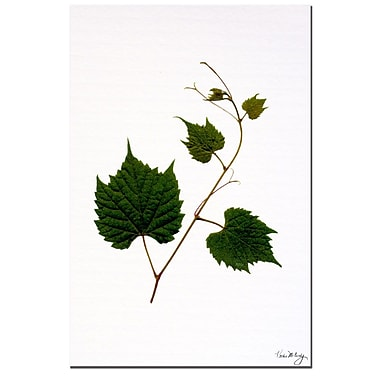 Trademark Fine Art Vineyard by Kathie McCurdy Canvas Art Ready to Hang