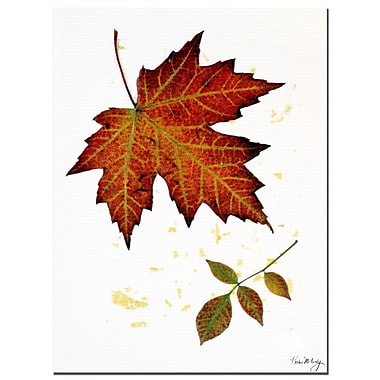Trademark Fine Art Red Maple by Kathie McCurdy-Canvas Art Ready to Hang