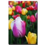 Trademark Fine Art Kurt Shaffer 'In Amont the Tulips' Canvas Art 30x47 Inches